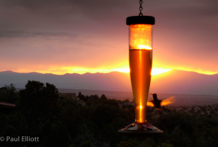 New Mexico: Hummingbird Sunset