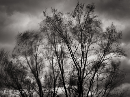 Wind in the Trees #1