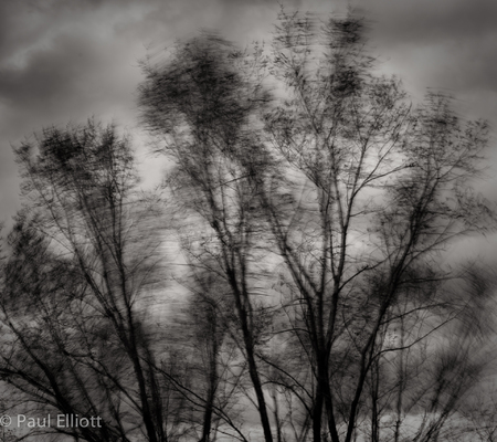 Wind in the Trees #2